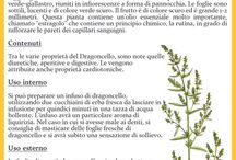 orto officinale