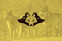 romanian wolf