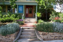 Project - Front Yard drought tolerant