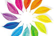 Renk çemberi