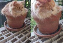 cat's gone to pot!