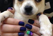 My dogs / York Many chihuahua Garisson