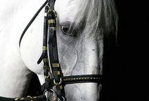 HorseMagic