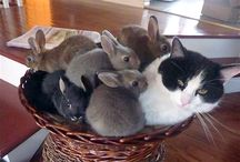 MOTHER CAT WITH BABY BUNNIES