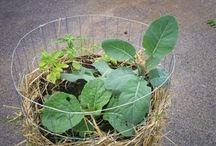 Vegetable Gardening / by Sarah Monk