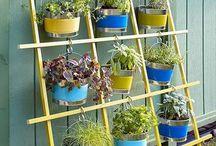 botanica / fiori piante idee per il terrazzo