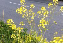 #flowers #yellow #plants #outdoor #nopeople