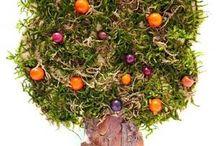 Baum 1