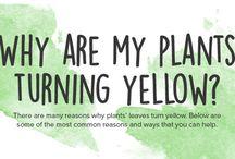 Gardening / Leaves turning yellow