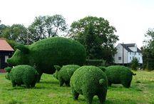 topiary tvarov
