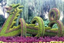 Topiary / by Paul Martinez