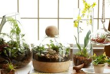 Indoor Plants / Bringing the outside inside - indoor plants, container gardening, plant terrariums, etc