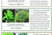 Herbs etc