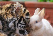 My ' FAVOURITE ANIMALS..'