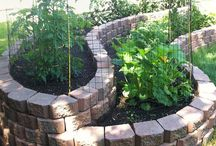 Raised Bed Gardens / A collection of Raised Bed Gardens / by Plant Care Today