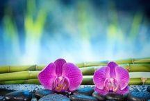Zen attitude & Jardin Japonais / Quel meilleur endroit pour méditer et se régénérer qu'un jardin zen ? De la philosophie à la réalisation, le jardin zen est la représentation idéale de la nature par l'homme. Suivez le maître zen…