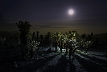 Photography: Landscape Art by Patricia Knight / I love venturing outside to photograph the landscape.  Especially since I live next door to Joshua Tree National Park.