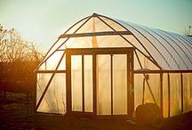 Garden / by Honey of HoneysLife.com