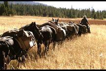 Horse backpacking in Yukon