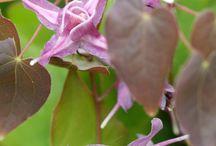 halfschaduwplanten