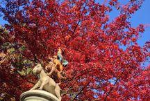 Herfst in de Efteling / De Efteling en herfst zijn een schitterende combinatie!