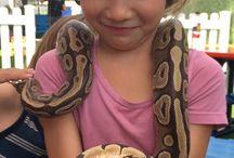 Safari Kamp Week Reptile Party / Safari Kamp Week Reptile Party