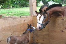 Horses♥ / ♥ Human and Animal ♥ Best friends forever