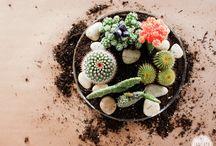 -Mason- Cactus