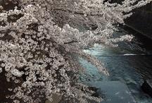 2013.03.28 川沿いの桜