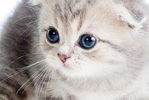 kissanpennut