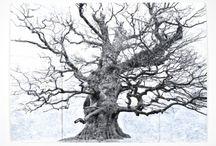 Trees I Love / by Bridget Casey