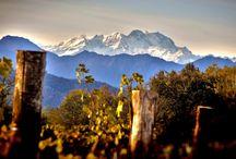 Torraccia del Piantavigna / Nel Piemonte del grandi vini, una storia di pregiate eccellenze locali e tradizione