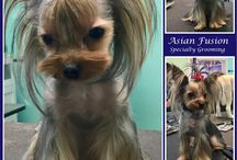 Asian Fusion Style / Go all out with Asian Fusion Stylized Grooming