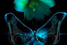 Butterflies !!!