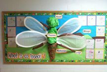 For my classroom- insects
