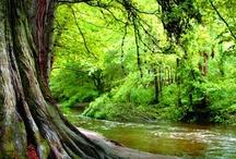 Powerscourt River Walk