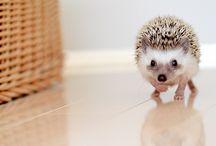 Hedgehog / by Britton Kendall