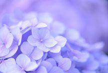 Purple / by Huey Huang