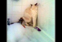 nie lubię kąpieli