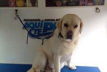 Clientes peluquería canina- Aquí te pelo/ Dog grooming / Clientes peluquería canina móvil en la provincia de Cádiz Mobile Dog groming