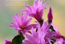 Como salvar flor de maio