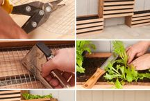 Gardening / Vege