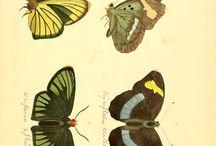 Kelebekler-Butterfly
