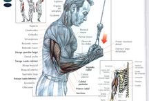 Anatomy and exercise