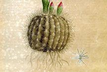 progetto cactus