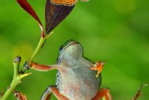 frogs / by Linda Meyer