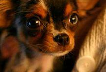 Dogs / Sooooooooooo cute