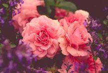 flower vintage art