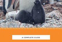 Travel Tips: Antarctica