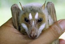 Animals | Bats / Bats of all kinds